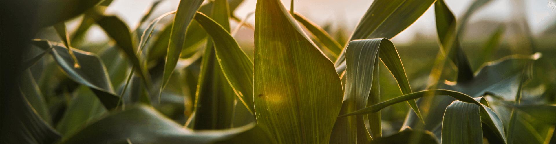 landbouwzaden